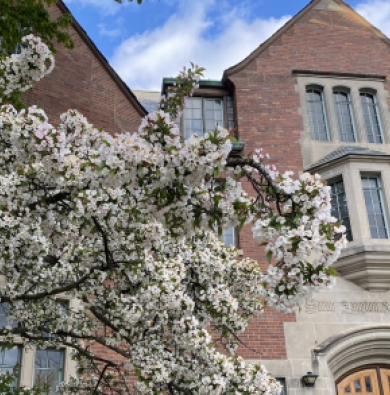 Photo of red-brick building on campus with stone details and tall windows, behind a flowering white tree.